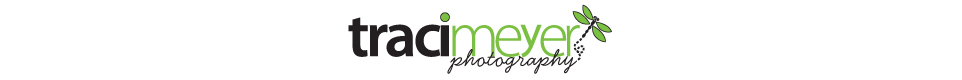 traci meyer photography blog logo